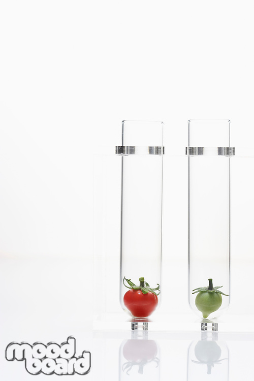 Red and green tomatoes in test tubes