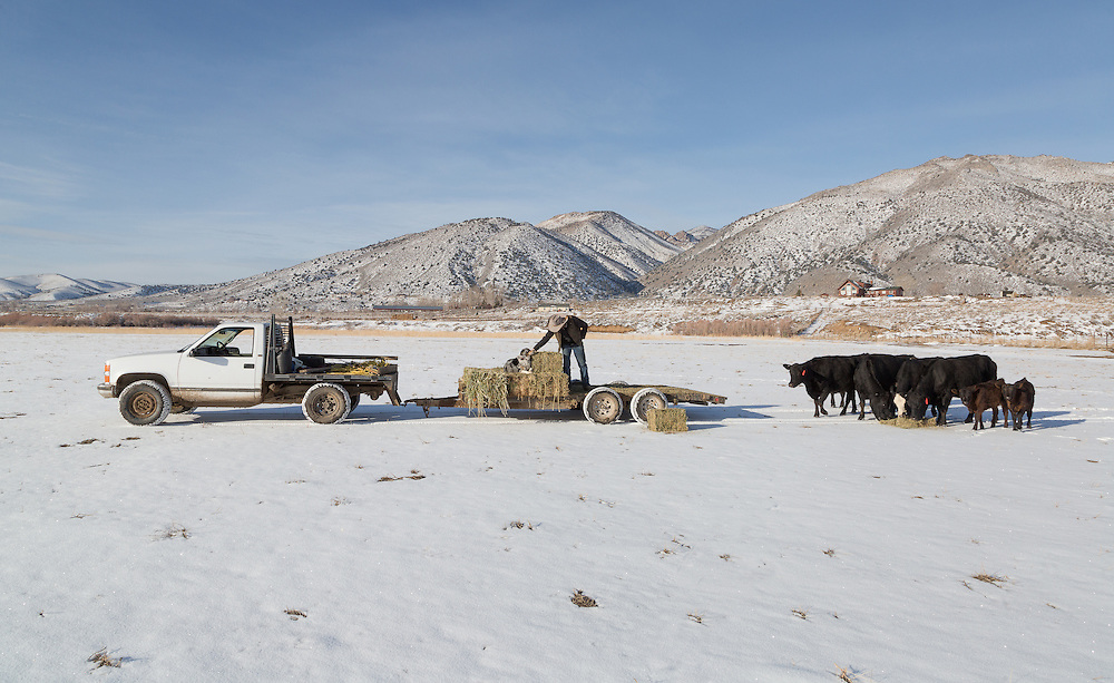 Family owned ranch in Nevada's Smith Valley. Hormone free, humanely raised cattle.