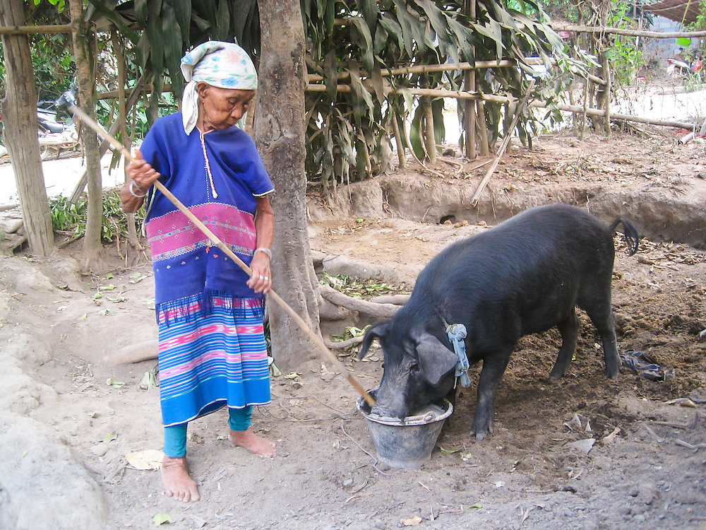 This is Mida's grandmother's friend, Suh luh Pee.  She is feeding her pig.  She has to take care of her pig for around eight to nine months. She will then give the pig to her relatives as a wedding gift. In a Buddhist ceremony, the pig has to be killed and eaten during the wedding.