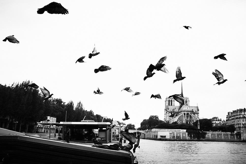 Pigeons s'envolant depuis la péniche le Pélican, en passant devant Notre-Dame de Paris.