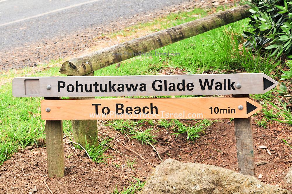 New Zealand, North Island, Auckland pohutukawa glade walk