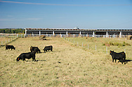 OSU Purebred Beef Cattle Center Department of Animal Science Facilities