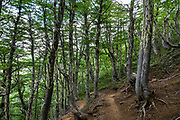 Forested switchbacks of the Caracoles trail on the way to Otto Meiling Refuge, on Cerro Tronador, an extinct stratovolcano in the southern Andes, near Bariloche, in the Lake District of Argentina, in Patagonia, South America.