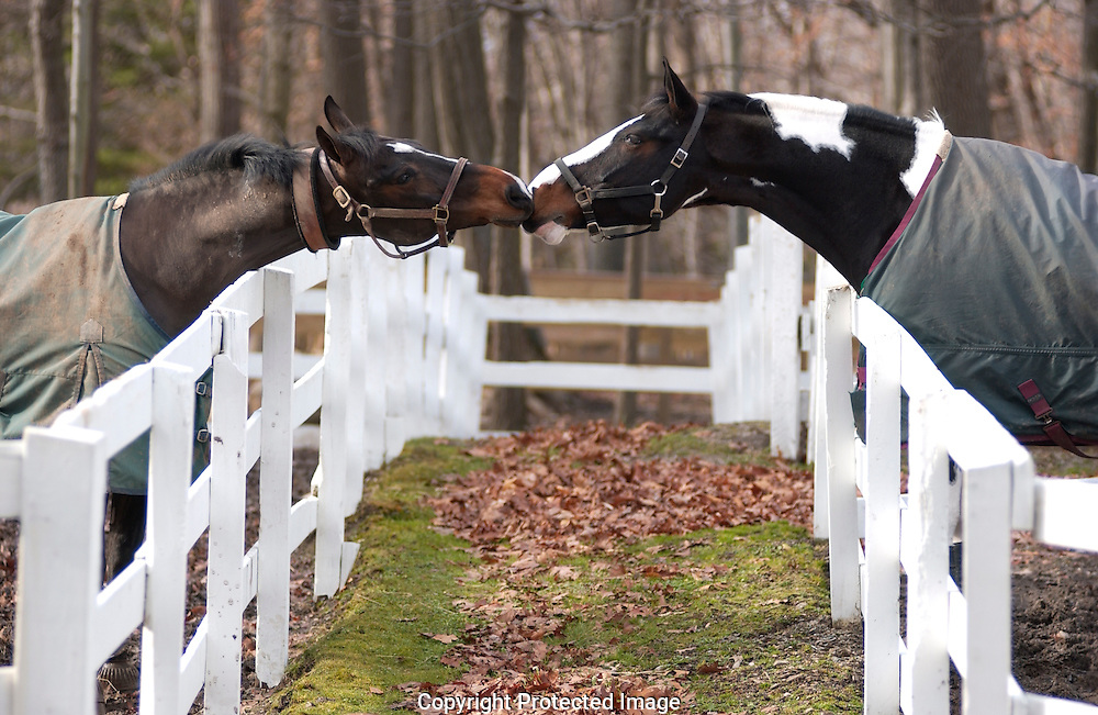 Two horses touch noses from across a fence at a horse farm.