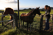 "Kamehana Tachera, 11, pets one of the horses at Kahua Ranch in North Kohala, Hawaii, where her father, Wayne, is employed as a cowboy.  The girls' great-grandfather, grandfather and father are or were all cowboys and they live in ""cowboy housing"" on the ranch.  The girls learned to ride horses as toddlers and have grown up with the ranch as their playground. ""It's very beautiful up here.  Not many children get to see this lifestyle"", says Kamehana who spends time caring for and riding horses after school."