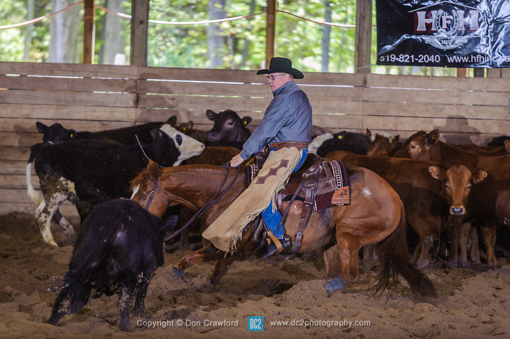 May 20, 2017 - Minshall Farm Cutting 3, held at Minshall Farms, Hillsburgh Ontario. The event was put on by the Ontario Cutting Horse Association. Riding in the Non-Pro Class is John Koop on Head Cat owned by the rider.