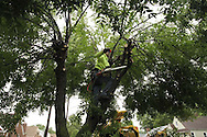 "Joel Thomas removes branches in a tree that had many hanging into the street following heavy rains and amid threats of severe weather in the Belmont area of Dayton, Wednesday, June 4, 2008.  City of Dayton Supervisor Joseph Chaney said that this is evidence that, ""topping is not the answer."" referring to the many smaller (and weaker) branches that come out of an area after tree topping occurs."