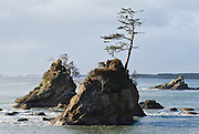Two bald eagles perch on a tree branch growing on an isolated sea stack rock, in Tillamook Bay, near Bay City, on the Oregon coast, USA.