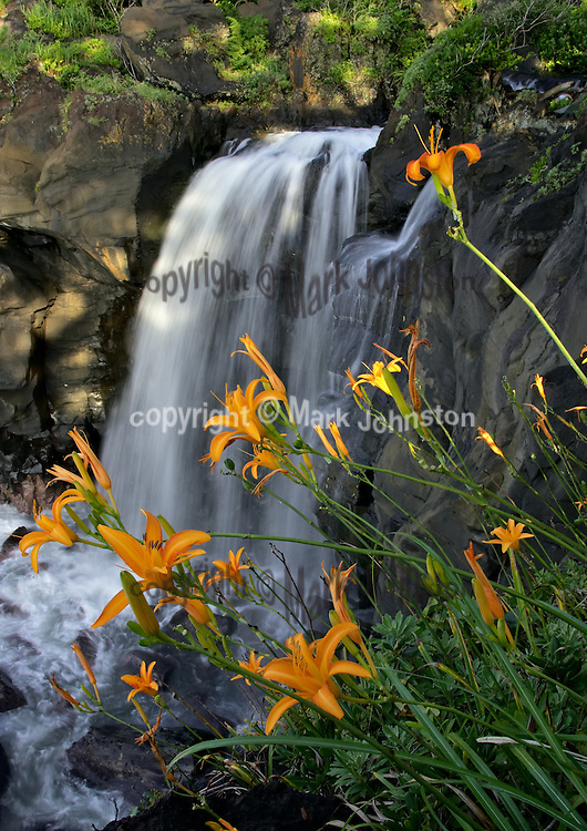 Lilies bloom over a waterfall on the coast of the Izu Penninsula near Izu Kogen, a couple hours south of Tokyo by train.