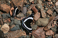 17: LAKE SUPERIOR BUTTERFLIES, BARK