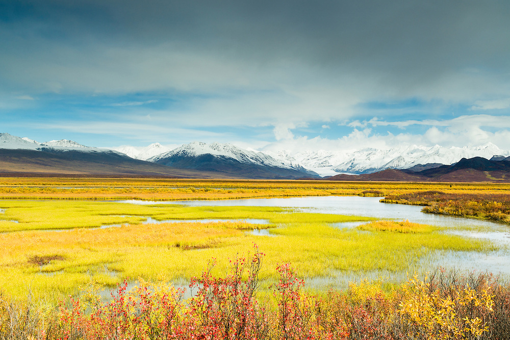 Autumn colors in resin birch and willow contrast with the vibrant marsh grass and the Alaska Range in Maclaren River Valley near the Denali Highway in Southcentral Alaska. Morning.