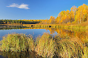 Autumn colored trees and vegetation surround a pond<br /> Prince Albert National Park<br /> Saskatchewan<br /> Canada