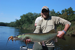 "Musky Country Outfitters guide Brian ""Lucky"" Porter holds a solid Wisconsin muskellunge on fly outside Hayward WI. Taken on a trip to WI by Dally's Ozark Fly Fisher fly shop and guide service Cotter Arkansas."
