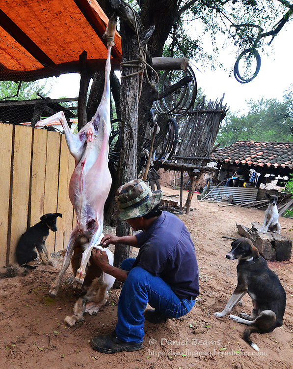 Slaughter in goat in Isosog