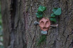 Denham, UK. 4 February, 2020. An ancient poplar tree in Denham Country Park threatened with imminent destruction by the HS2 high-speed rail link is decorated with the figures of tree spirits by environmental activists. Planned works in the immediate area are believed to include the felling of 200 trees and the construction of a roadway, Bailey bridge, compounds, fencing and a parking area. Credit: Mark Kerrison/Alamy Live News