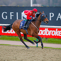 New Rich - john Fahy wins<br /> The Bet And Watch Every Race At Unibet Handicap<br /> Lingfield Park<br /> 17/2/16.<br /> ©Cranhamphoto.com