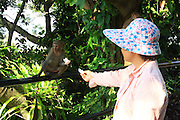 SANYA, CHINA - AUGUST 11: (CHINA OUT) <br /> <br /> Mass Propagation Of Wild Monkeys Brings More Animal Attacks <br /> <br /> staff feed a wild monkey at Luhuitou Park on August 11, 2014 in Sanya, Hainan province of China. Dozens of wild monkeys multiplied to over 700 at Luhuitou Park and attacked tourists especially those who carried food once in a while.<br /> ©Exclusivepix