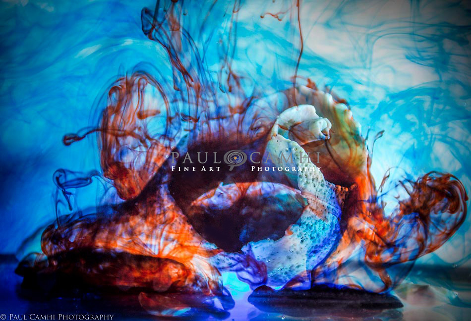 Fine Art Photography by Paul Camhi. Limited edition professional photography. Pigment ink giclée print
