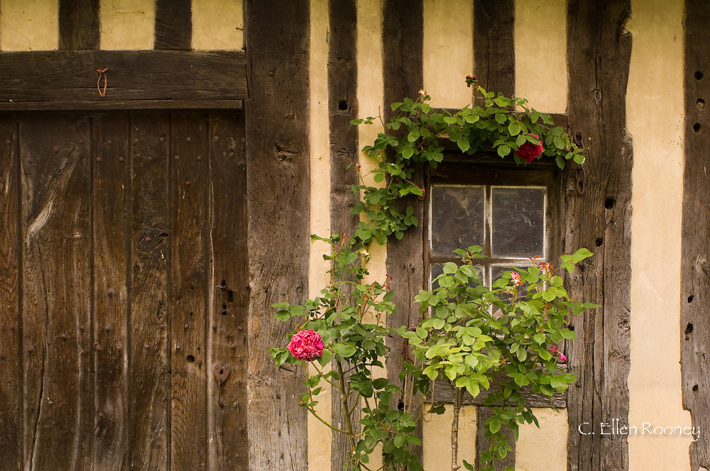 A half timbered barn with roses growing in Coupesarte, Normandy, France