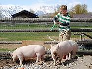 Natural Pigs