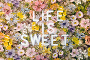 Oxford UK-Nov 20: Life is Sweet on a bed of flowers - graffiti stencil on floral wallpaper in the kitchen on 17 Nov at Grove House, Iffley