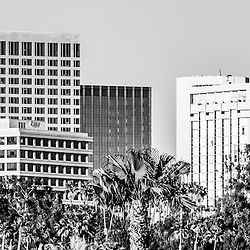 Newport Beach skyline panoramic picture black and white photography. Photo includes Newport Beach office buildings and palm trees. Newport Beach is an affluent city in Orange County California. Photo panorama ratio is 1:3.