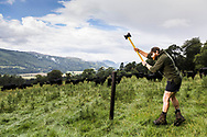 Richie Duncan from RD Fencing photographed at Rotmell Farm, Dunkeld. For Farmers Journal. Payment to Craig Stephen. No re-use without payment.