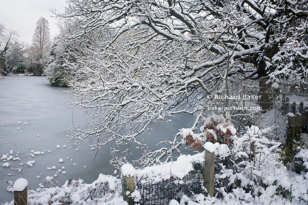 Frozen pond and tree landscape in Dulwich Park, south London during mid-winter snow.