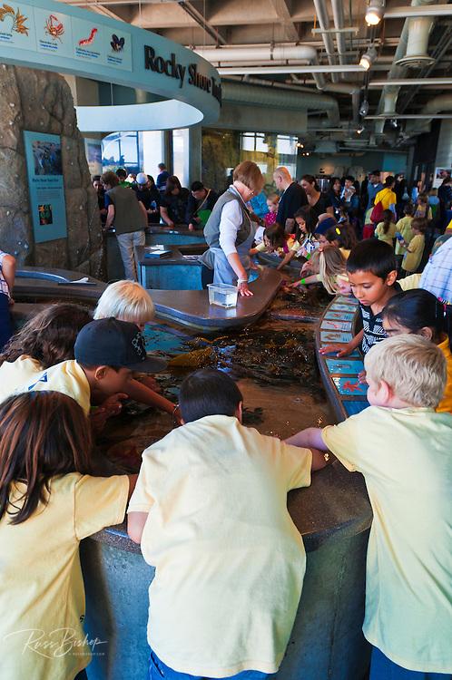 Kids enjoynig the touch pool, Monterey Bay Aquarium, Monterey, California