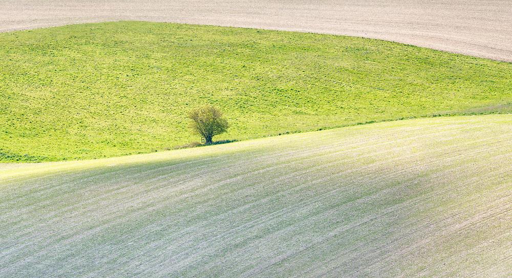 A field belonging to Well Far, near Berkhamsted.