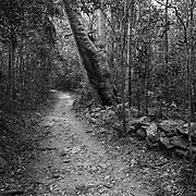 Reef Bay Trail