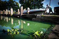 Mandeville, Louisiana, June 29, 2019- Cyanobacteria, refferred to as  blue-green algae, in Lake Pontchartrain.  The city closed the beached do to the algae outbreak which many blame on the openning of the spillway combined with the warm tempartures. Mandeville, is on the north shore of the lake, across from New Orleans.