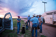 Woodward, OK - Justin Howard and friends gather before sunrise near Woodward to gather cattle for branding.