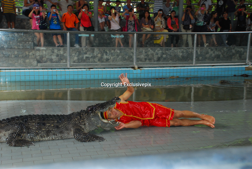 21/07/2011<br /> Crocodile Wrestling Thailand Style<br /> On 1st February 1992, the Million Years Stone Park and Crocodile Farm was opened to tourists and the general public for the first time. Since then, new decorations and things of interest have been added to the Park continuously. Furthermore, amusing and thrilling performances have been held regularly, including daily shows of men fighting with adult crocodiles bare-handed, making the Park a famous tourist destination of Thailand, attracting thousands upon thousands of visitors, both Thais and foreigners, every year.<br /> Our Photographer Tom Howell, who we sent along to the show said: ' The Crocodiles are large big toothed and very angry crocs, They all look mean and ready to eat someone. Its quite amazing how the thai performers drag the crocodiles from there pit and make them do stunts. At one point he ran and slide across the pitt and straight into the jaws of an opened mouthed huge crocodile&quot;<br /> &copy;Tom Howell/Exclusivepix