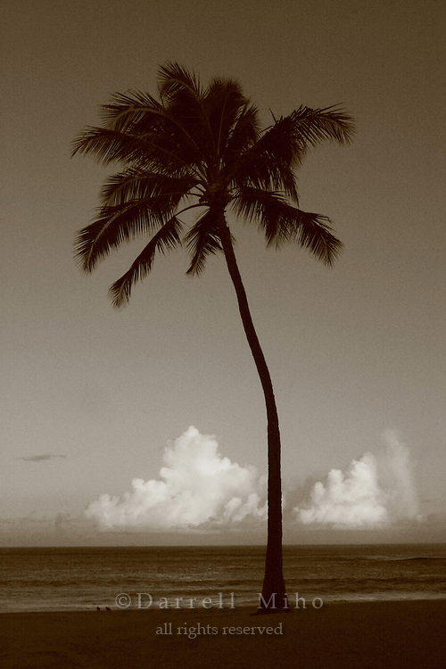 Feb. 17, 2006; Waimea, Oahu, HI - Palm tree at Waimea Bay on the north shore of Oahu...Photo Credit: Darrell Miho.© Darrell Miho