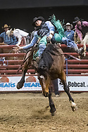 Bareback rider Jordan Pelton rides Mosbrucker Rodeo's 205 Magic Moments during the Bismarck Rodeo on Saturday, Feb. 3, 2018. He had a score of 78. More photos of each run are available at Bobwire-S.com.