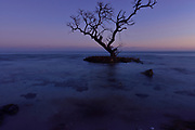 Lone Tree stands on island off Spanish Harbor Key against the backdrop of a setting sun