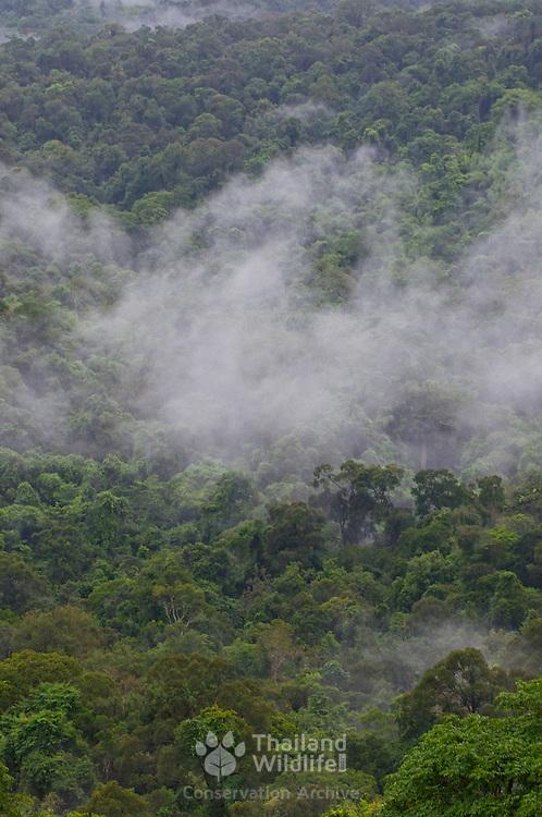 Mixed evergreen tropical forest at Pang Sida National Park, Thailand.