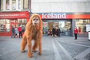 Iceland | Orangutan Newport