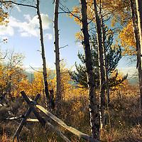 Split-rail fence in aspen grove, Antelope Flats, Wyoming, vertical