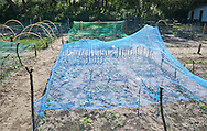 Moestuin - Vegetable garden