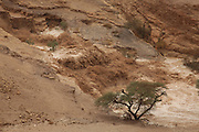 Israel, Dead Sea, A flash flood in the Zohar river