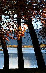 THEMENBILD - herbstlich gefärbte Blätter und Bäume an einem sonnigen Herbsttag mit Blick auf Zell am See und die umliegenden Berge, aufgenommen am 21. Oktober 2015, Zell am See, Österreich // autumnal colored trees with leaves on a sunny Autumn Day, Zell am See, Austria on 2015/10/21. EXPA Pictures © 2015, PhotoCredit: EXPA/ JFK