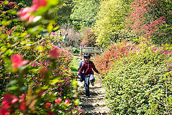 © Licensed to London News Pictures. 15/04/2014. Guildford, UK. Boys run down a stairway. People enjoy the afternoon  sunshine at Winkworth Arboretum in Surrey today 15th April 2014. Photo credit : Stephen Simpson/LNP
