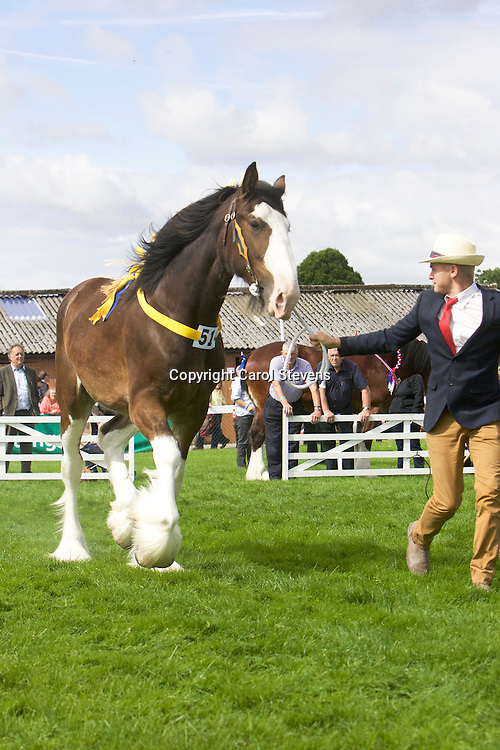 Paul Bedford's Bay Colt <br />