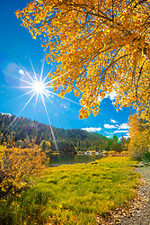 """Coldstream Pond in Autumn 4"" - Photograph of the yellow leaves on a cottonwood tree with Coldstream Pond in the background. Truckee, California."