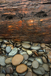 Kalaloch Beach Still Life, Kalaloch, Olympic National Park, Washington, US