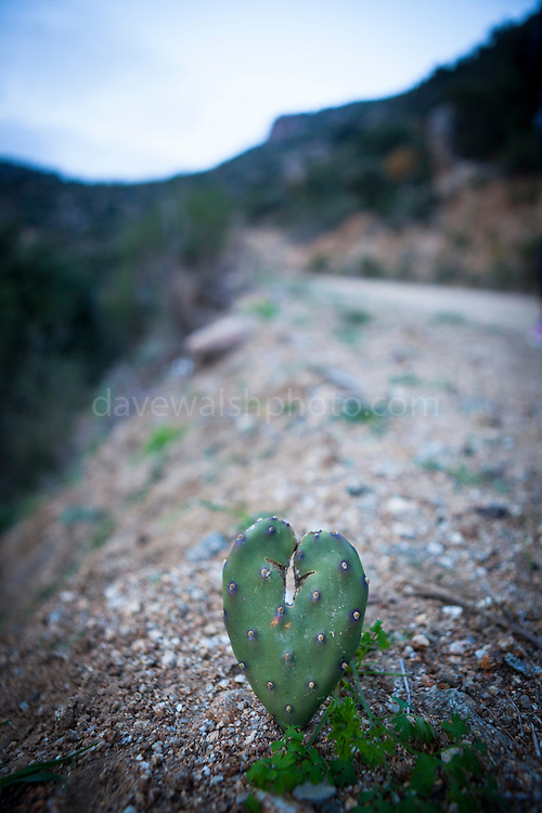 Cactus Heart on the Lost Highway