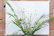 wild flower arrangement against a white background placed