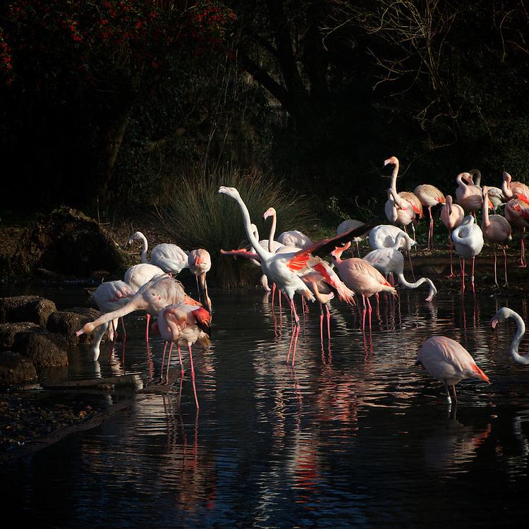 Wildlife photography at WWT (Wildfowl & Wetlands Trust) Slimbridge Wetland Centre